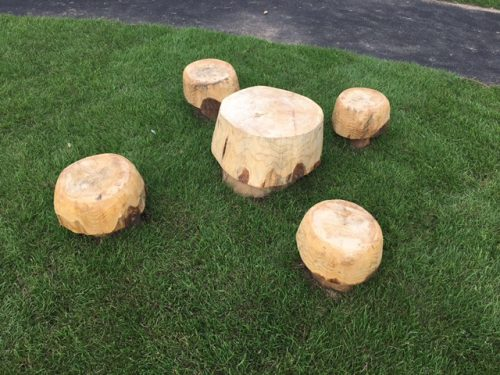 gallery image educational mushroom stools and table