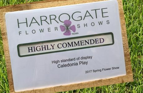 What's Happening Harrogate Flower Show