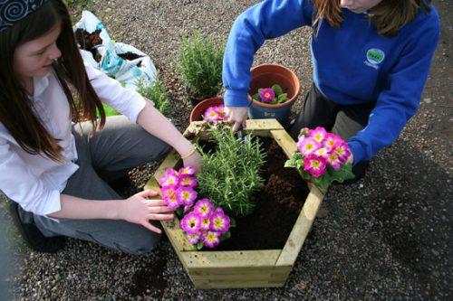 Educational Play gallery image hexagonal planter