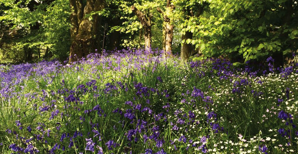 Existing customers page extra images - bluebells