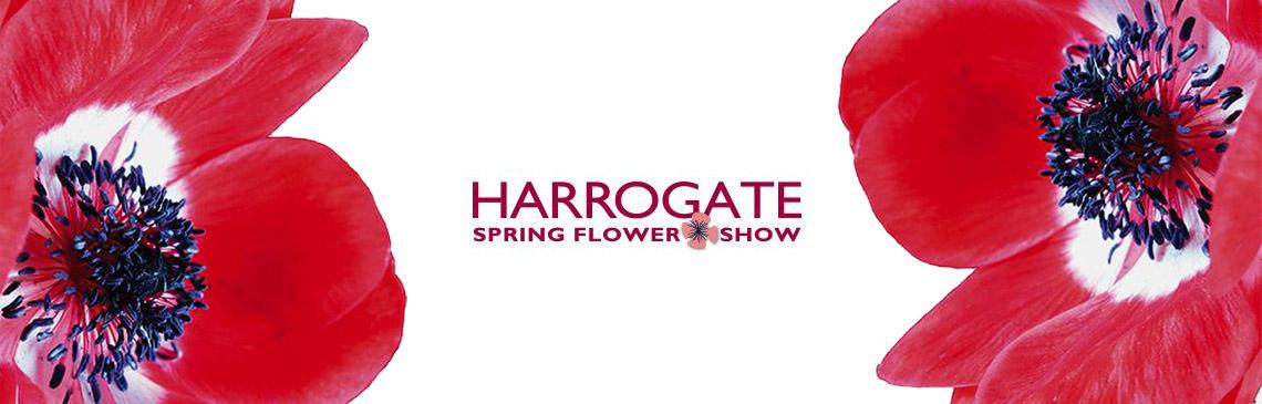 Harrogate Spring Flower Show news banner image