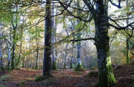news banner image evanton community woodland