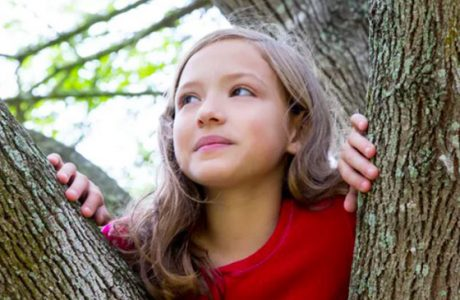 News should children climb trees banner image