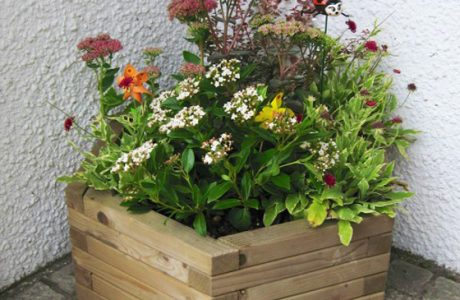 news banner image planters